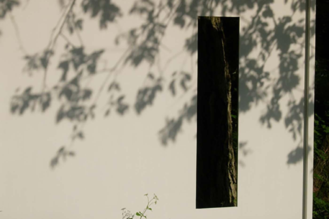02_Ansicht Baumbild, Schloss Fasanerie [2007]